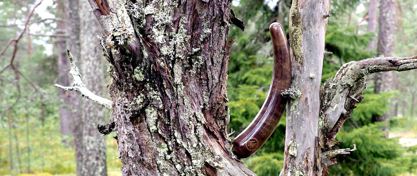 acacia-bann